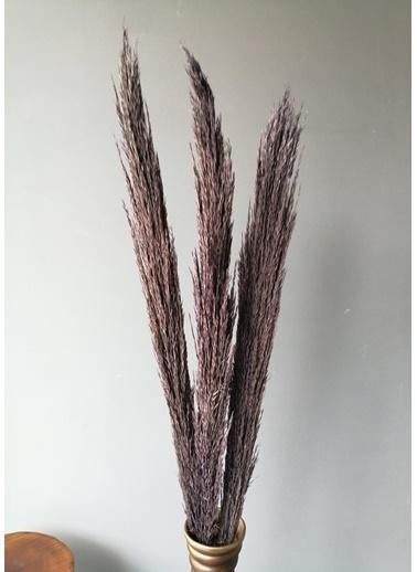 Kuru Çiçek Deposu Gerçek Kuru Çiçek Mor İthal Dökülmeyen Şoklanmış Pampas (3 Adet 150 cm) Mor